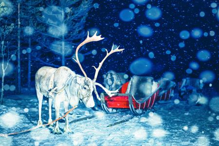 Reindeer in Finland in Lapland in winter at night.