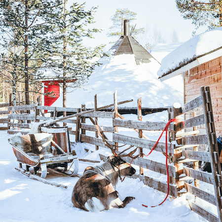 Reindeer sled at Finland in Lapland in winter.