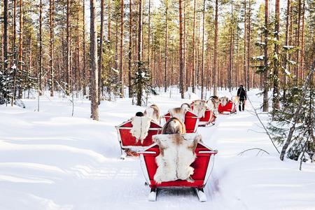Reindeer sled in Finland in Lapland in winter.