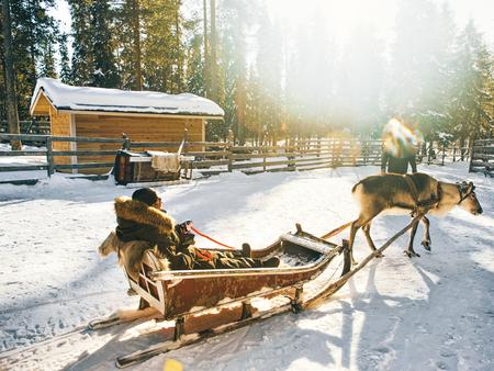 Woman in Reindeer sledding in Finland in Lapland in winter. Stock Photo