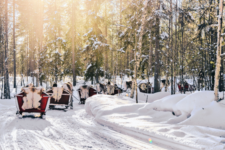 Reindeer sled in Finland in Lapland in winter.