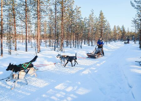 Rovaniemi, Finland - March 5, 2017: Family riding Husky dog sled in Finland in Lapland in winter.