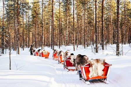 Rovaniemi, Finland - March 5, 2017: Reindeer sledding safari in Finland in Lapland in winter. Editorial