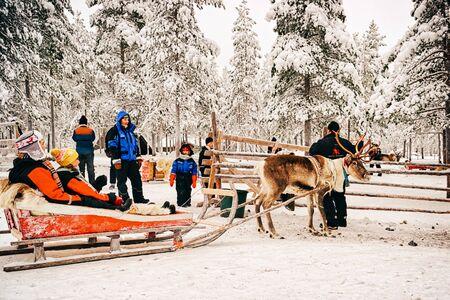 Rovanimi, Finlandia - 30 dicembre 2010: Preparazione alla gara sulla slitta trainata da renne in Finlandia in Lapponia in inverno. Editoriali