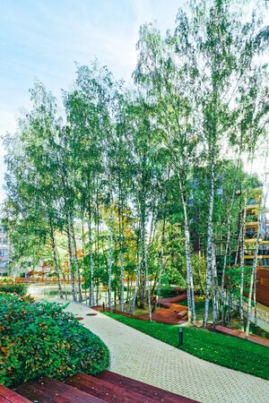 Birch trees and Modern glass apartment building. And outdoor facilities.