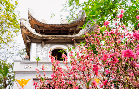 Ngoc Son Temple of Jade Mountain on West Lake in Hanoi, capital of Vietnam in Southeast Asia. Traditional tower gate architecture. Sakura tree flowers blooming and blossoming. Editorial
