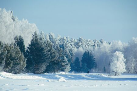 Winter snow forest background Landscapes and cold nature and trees
