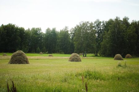 Hay piles on field at countryside in summer 写真素材