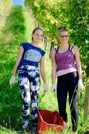 Glücklich lächelnde junge Mädchen, die Trauben im Weinbergsommer schneiden
