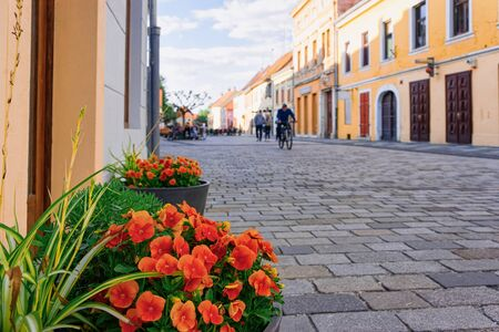 Flowerpot with flowers in cobblestoned Street in Old city in Varazdin in Croatia. Cityscape with tourists in famous Croatian town in Europe in summer Archivio Fotografico