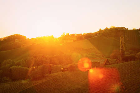 Sunset at heart shape wine road in vineyards in Slovenia Standard-Bild