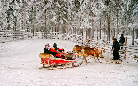 Finish of the race on the reindeer sledges reflex Stock Photo