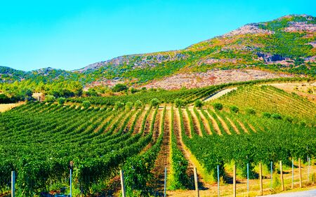 Rural landscape. Beautiful vineyards and agricultural Scenery of Perdaxius, Carbonia-Iglesias. Panorama in South Sardinia island of Italy. Sardegna in summer. Cagliari province. Mixed media. Zdjęcie Seryjne