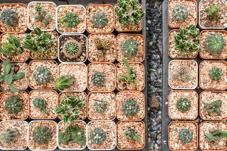flowerpots: cactus in flowerpots Stock Photo