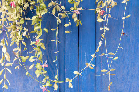 blinder: tree branch with blue wooden background