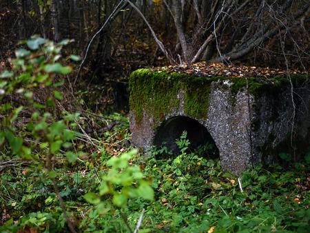 緑に囲まれた苔で覆われた古いビルディングブロック。 写真素材 - 94594702