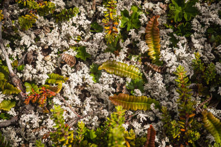 Floor flowers and plants close detail in Patagonia, near of Ushuaia , Argentina Banco de Imagens - 94705606