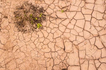 Dry floor in tehe desert of Atacama with a growing plant. Background