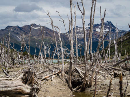 Dead forest (caused by beavers) in Tierra del Fuego, Argentina, Patagonia Banco de Imagens - 118817973