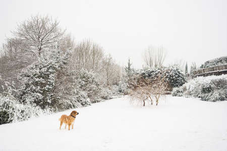 Mastine dog playing in the snow. Snow landscape. Big beautiful dog