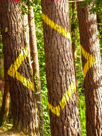 Painted forest in Oma, Basque Country. Ibarrola Stock Photo