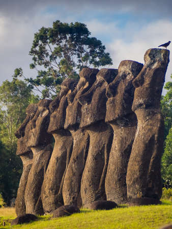 The moais of Ahu Akivi in Easter Island. Seven moais looking to the ocean, representation of Hotu Matua