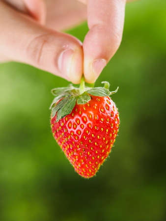 Strawberry held by stem with hand with green background, close up