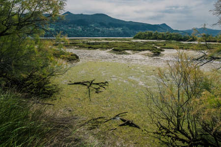 Marshlands and swamps in the Urdaibai Biosphere Reserve in the Basque Country, Spain