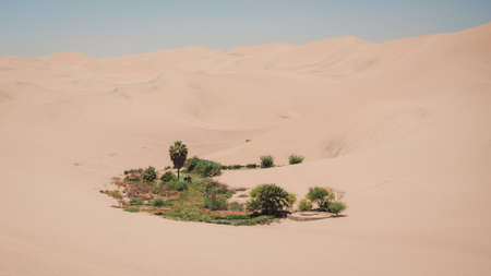Little oasis near Huacachina oasis in Peru, desert in Ica city Фото со стока