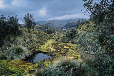 Cajas National Park in the city of Cuenca in Ecuador, with more than 1000 lagoons Фото со стока - 131992303