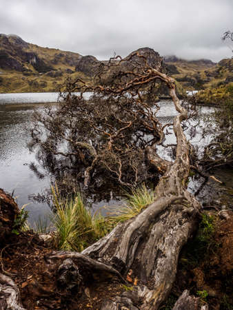 Cajas National Park in the city of Cuenca in Ecuador, with more than 1000 lagoons Фото со стока - 131992316