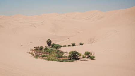 Little oasis near Huacachina oasis in Peru. palm tree Фото со стока - 131749949