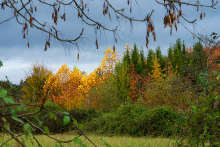 Trees of different colors, red, yellow and green in the autumn