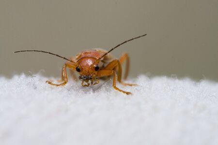 insecto naranja