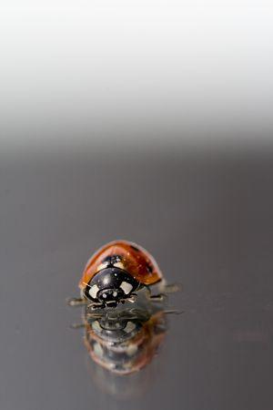 ladyfly: Ladyfly
