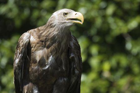 a great eagle photo