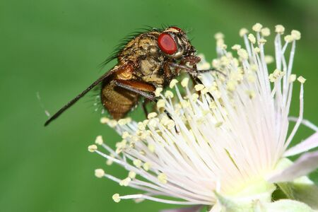flier: a macro of a great insect, a fly
