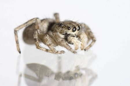 a great spider with eight eyes photo
