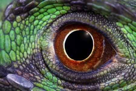 a macro of an eye of a green iguana