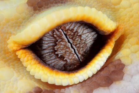 a macro of the eye of a fantastic leopard gecko photo