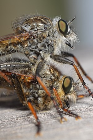sense of sight: a extreme macro of a small insect