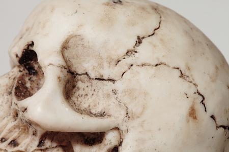 cranium: detail of an human cranium Stock Photo