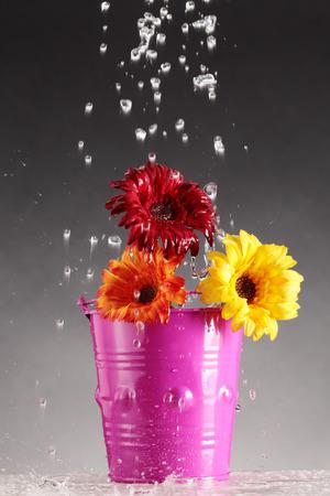 brilliant colors: regar una flor con colores brillantes