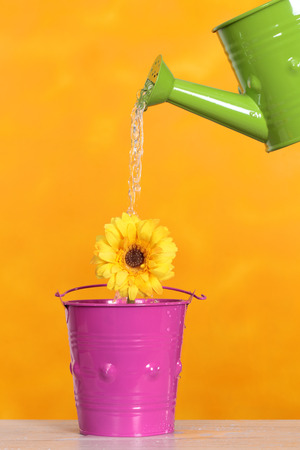 brilliant colors: watering a flower with brilliant colors