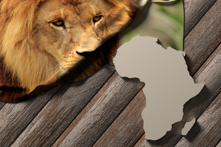 3d rendering of an africa map and a picture of a lion photo