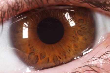 ojos marrones: Primer extremo de un ojo humano