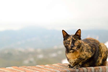 Cat on a terrace of a bar in Frigiliana, Malaga in Andalucia. Photograph taken on May 1 at the national workers party.