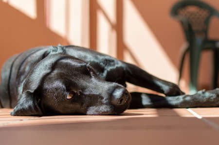 Black dog resting quietly in the sun in the marquee of a townhouse in Sanlucar de Barrameda. Stock Photo