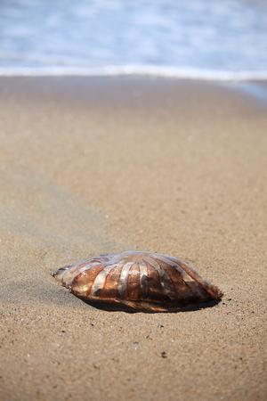 Jellyfish on the sand, Chile Фото со стока