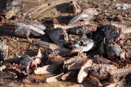 Heads of Fish Waste Фото со стока